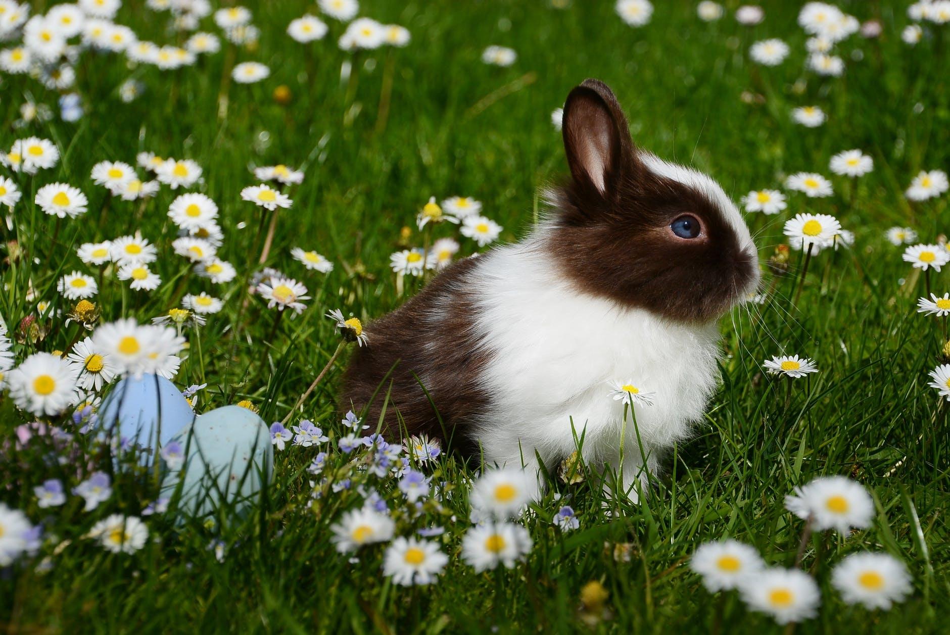 animal bright bunny chamomile